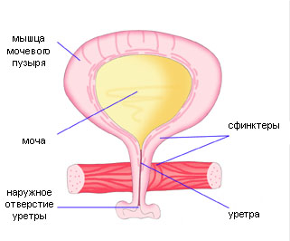 Оперативное лечение недержания мочи у женщин (операция TVT