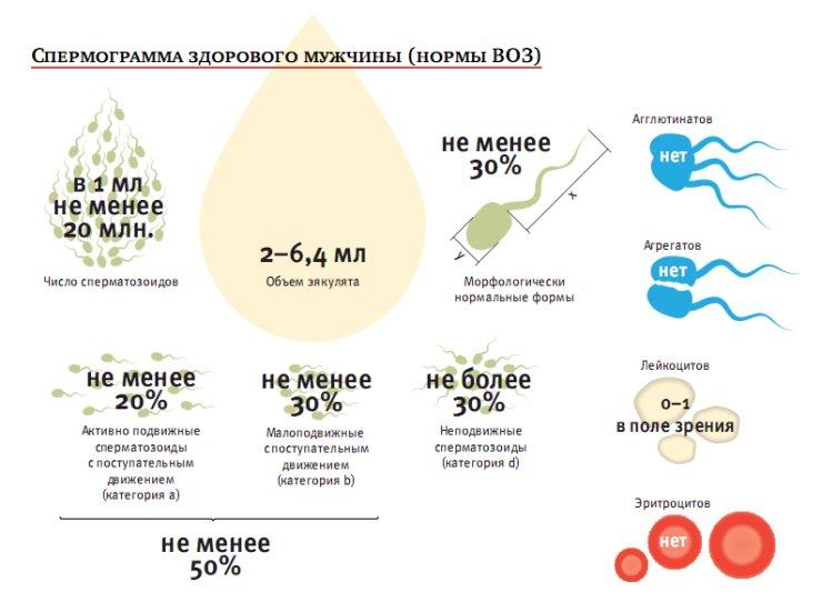 Патологические формы сперматозоидов с патологией головк